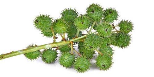 L'olio di ricino, rimedio miracoloso per unghie, ciglia, capelli e pelle