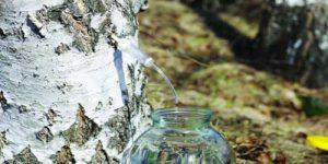 L'anticellulite più potente di tutti: la linfa di betulla